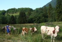 Las Vacas