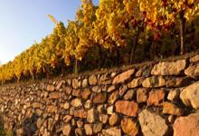 Vin Bestheim