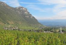 La combe des Grands'Vignes, Didier et Denis Berthellier