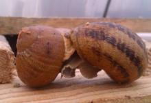 Croque nature, la fermette aux escargots