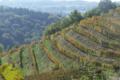 Les Vignes De Fechy