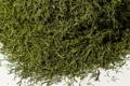 La Belle Verte,  Fenouil