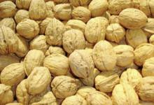 La noix de Grenoble
