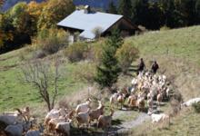 Alpage de Chalet Neuf / Famille Métral