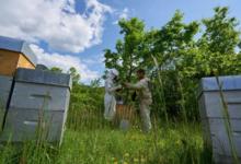 Damien Blampey, apiculteur