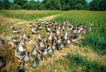 La ferme de Michaumaillé