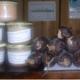 Autrucheland, terrine d'autruche aux cèpes