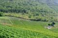 Domaine de la Cave Plantin