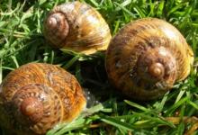 Helixa La Ferme Aux Escargots