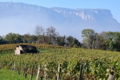 Vins de Savoie Salomon