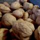 ferme des Bacholles, noix de Grenoble
