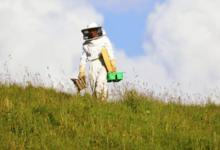 Boisier apiculture