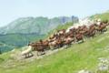 La Chèvrerie des Thoules