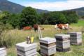 Les ruchers du haut chablais