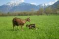 chèvrerie de Vesonne