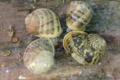 L'Escargot du Riberal