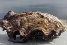 Gaec Le Rocher, Huîtres et Moules de Méditerranée