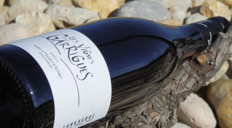 Domaine Saint Sylvestre, les vignes des garrigues