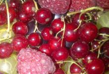 Baies Fruitet
