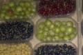 Baies Fruitet, groseilles à maquereau