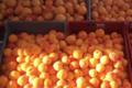 Mas De La Pedre Rodone, abricots