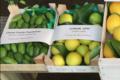 Pépinière Vessières, citron Lipo
