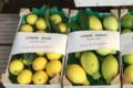 Pépinière Vessières, citron doux