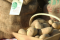Gaec du Mas Blanc, pommes de terre