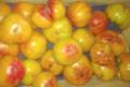 Mas dels Miquels, tomates ananas
