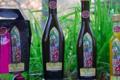 Le moulin de Llevant, huile d'olive de variété Olivière en fruité mûr