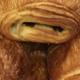 Boulangerie Pâtisserie Brilles, chocolatine