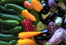 Les légumes bio de Romain, ferme des fanalous