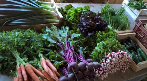 Les légumes bio de Romain, poireaux