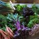 Les légumes bio de Romain, betterave crue