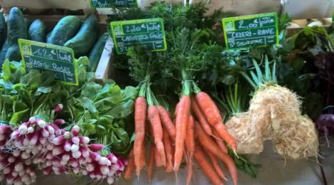 Les légumes bio de Romain, radis roses