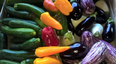 Les légumes bio de Romain, aubergines
