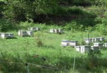 Les ruchers d'Ignatus
