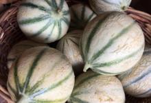 EARL du Mas Ay, melons