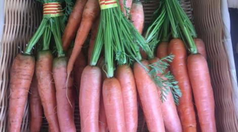 EARL du Mas Ay, carotte botte