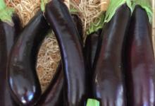 EARL du Mas Ay, aubergines