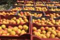 Vergers des Brunots, abricots