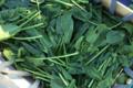 Fraîcheur des Cabanes, épinard