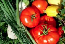 Les clapiers du Razès, légumes