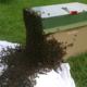 Le rucher des filles