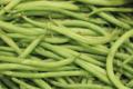Domaine de Toury, Haricot vert cueilli à la main