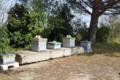 Miel des Sables de Camargue