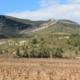 Vignerons De Camplong