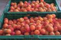 Le Jardin de l'Orbieu, abricots
