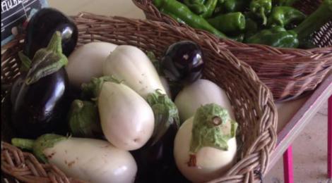 Le Jardin de l'Orbieu, aubergines