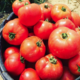 La Ferme d'à côté. tomates